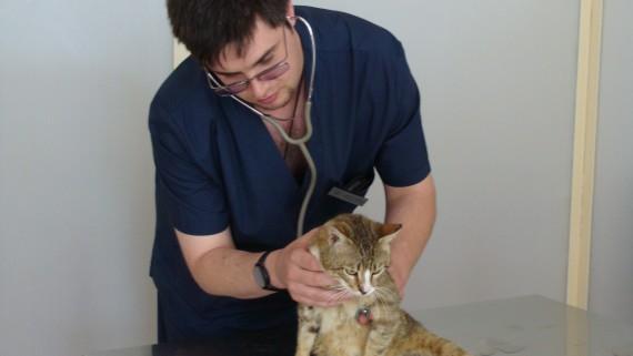 Ветеринарная клиника на роще